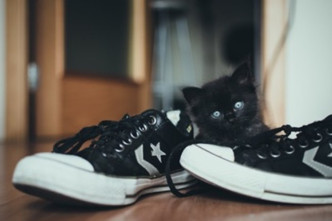 black kitten shoes