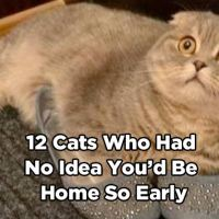 12 Cats Who Had No Idea You'd Be Home So Early