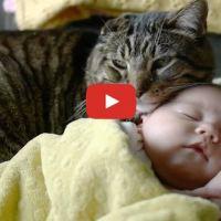 Cat Preciously Watches Over Newborn Baby