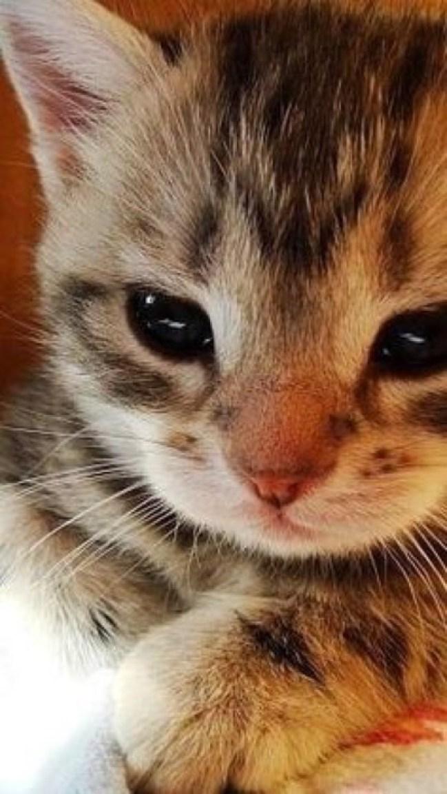 cute kitten copy 3