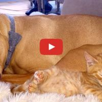 Dog Is SO In Love With His Tiny Kitten