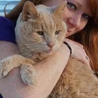 Woman Adopts 21 Year Old Cat To Give Him Best Remaining Days