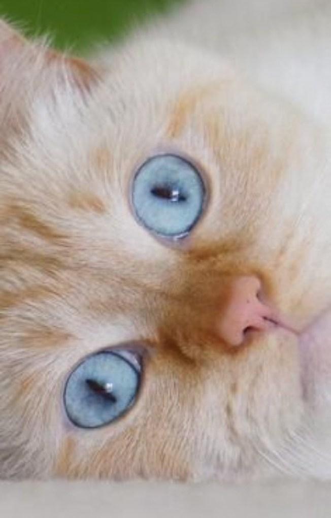 beautiful-blue-eyes