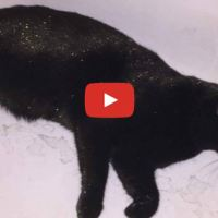 Cat Rolls In Glitter And Looks Absolutely Fabulous!