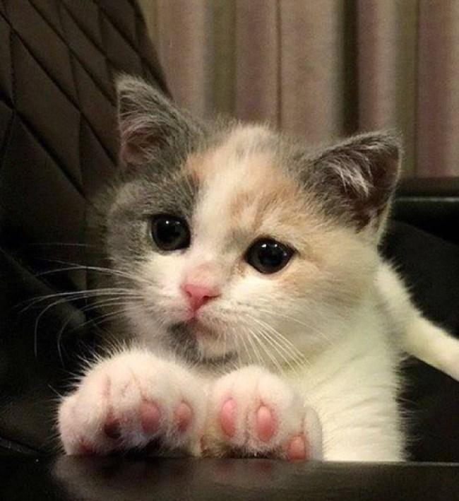 pawsome-kitten
