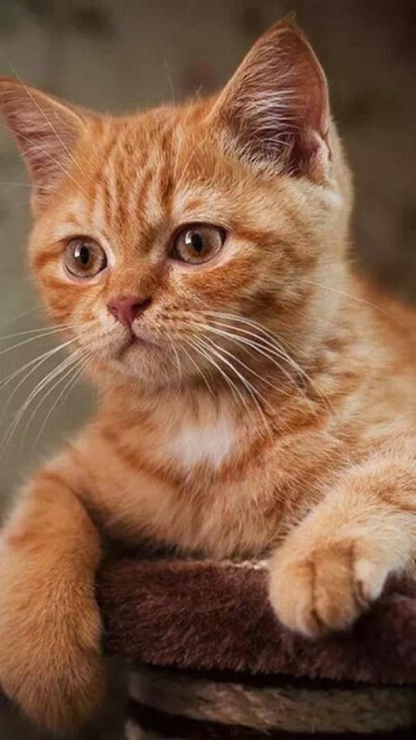 adorable-cheeky