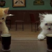 Two Irish Kittens Share a Guinness!