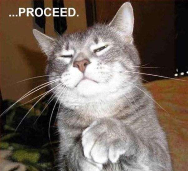proceed-judge-cat