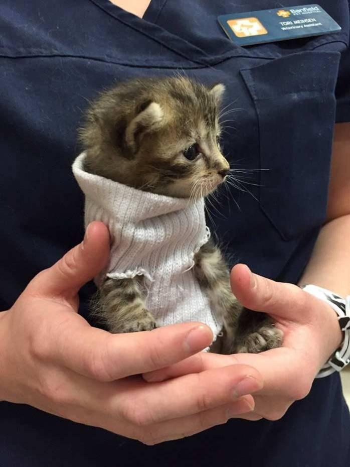 sock-kitten-2