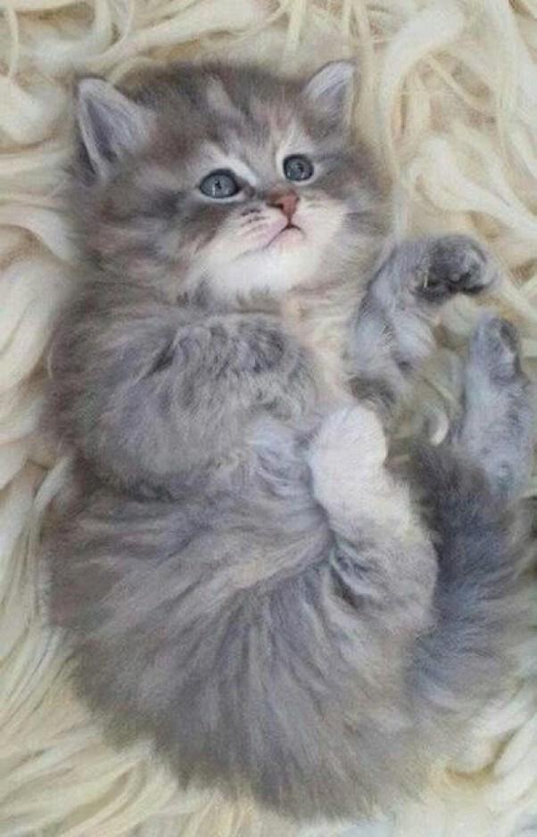 super-cute-kitten-copy