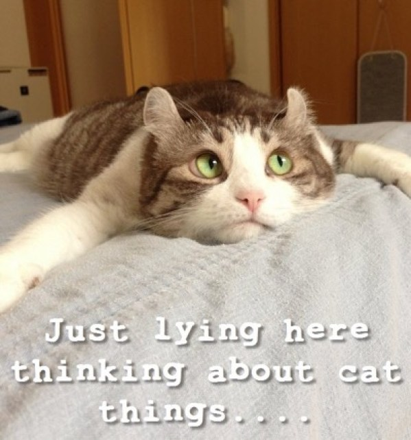 thinking-about-cat-things