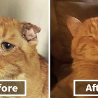 Couple Adopt Saddest Cat in the Shelter - In one hour the Transformation is Incredible