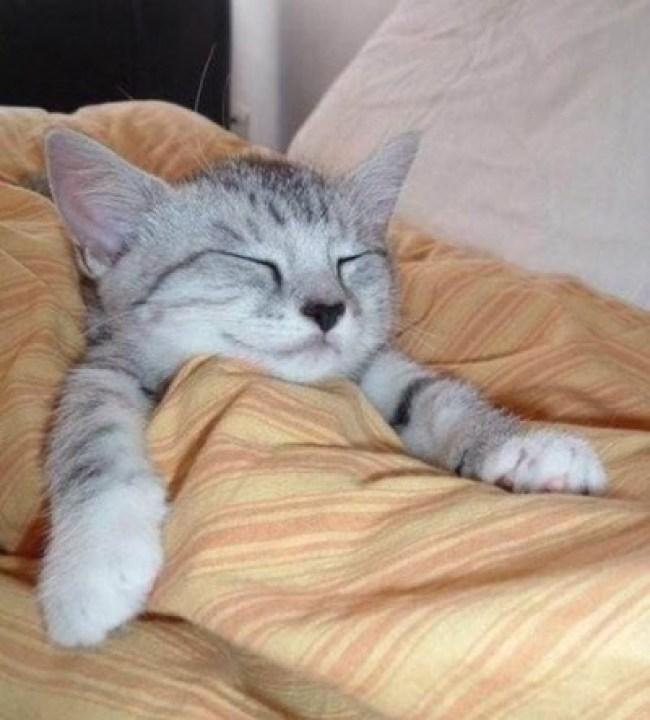 kitten-tucked-up