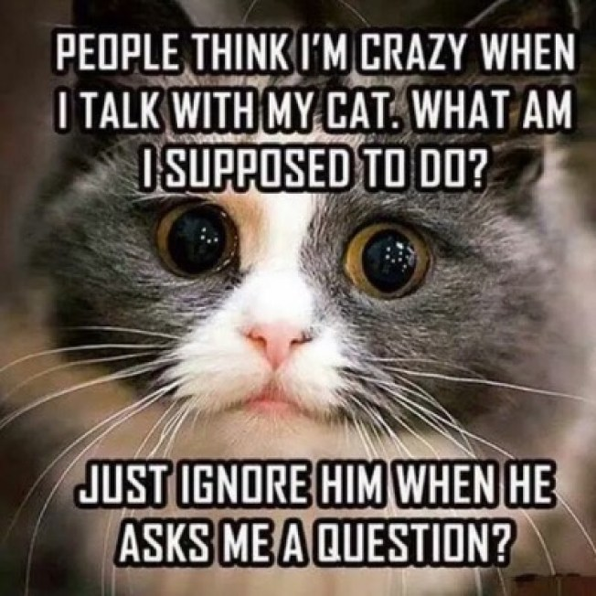 talk-with-cat-lol
