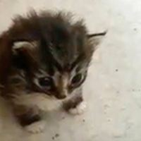 Stray Cat Brings a Tiny Surprise to Woman Who Gave Her Food
