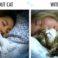 With Cat vs Without Cat