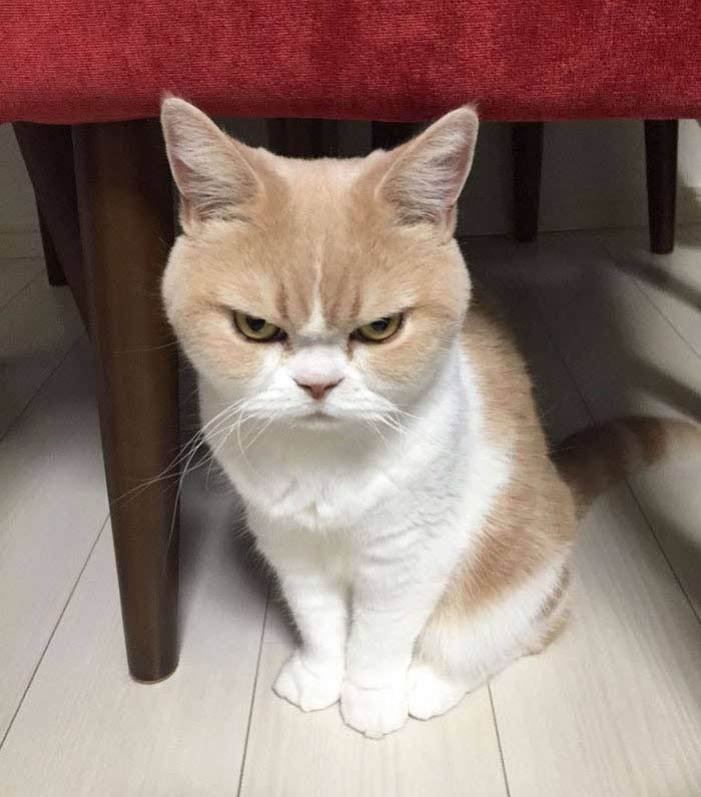angry-5