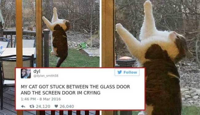cat tweets 8