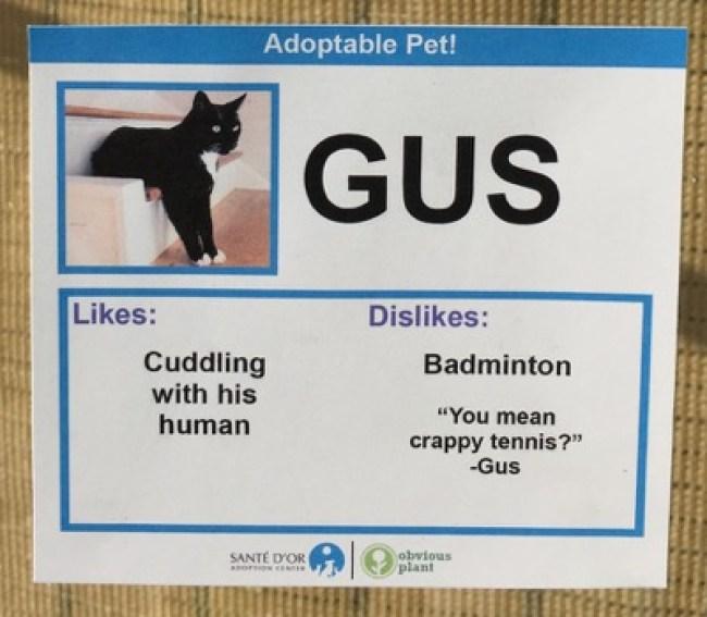cat cards 2