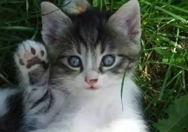 high five kitten