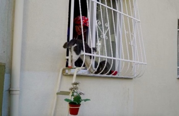 ladder 5