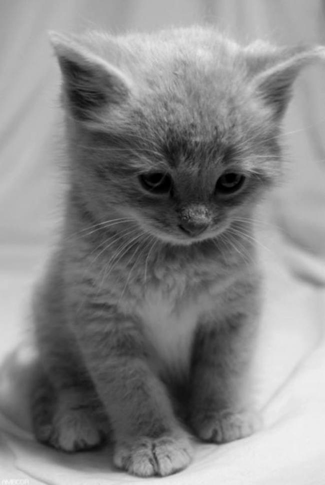 black white cute