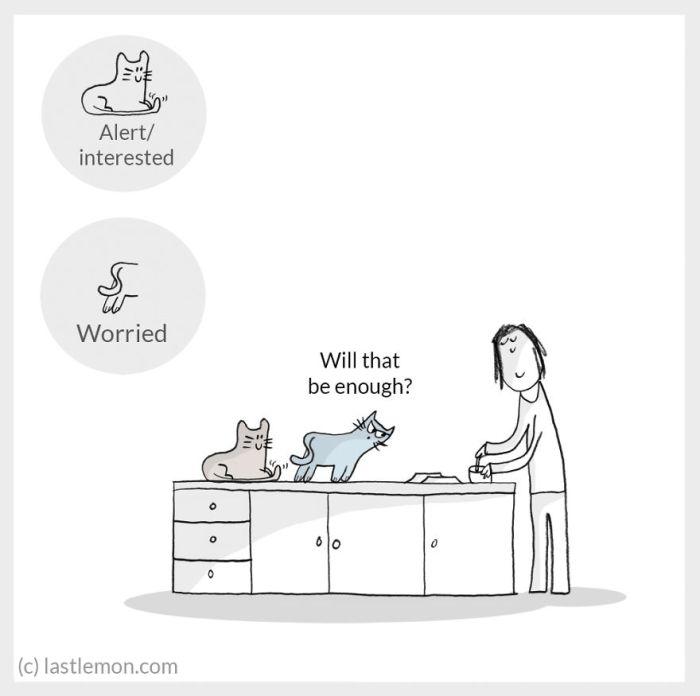 cat moods 6