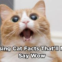 "18 Surprising Cat Facts That'll Make You Say ""Wow"""
