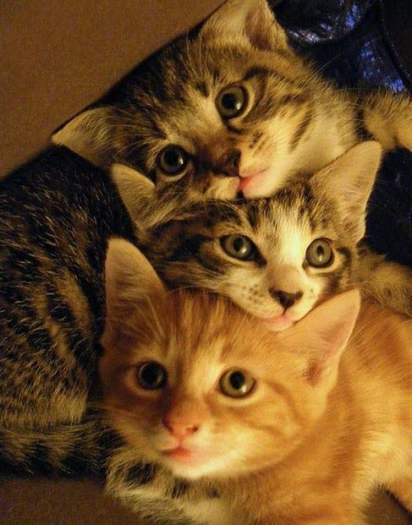 It's a cat stack