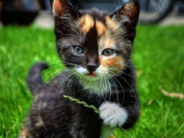 What a striking looking kitty