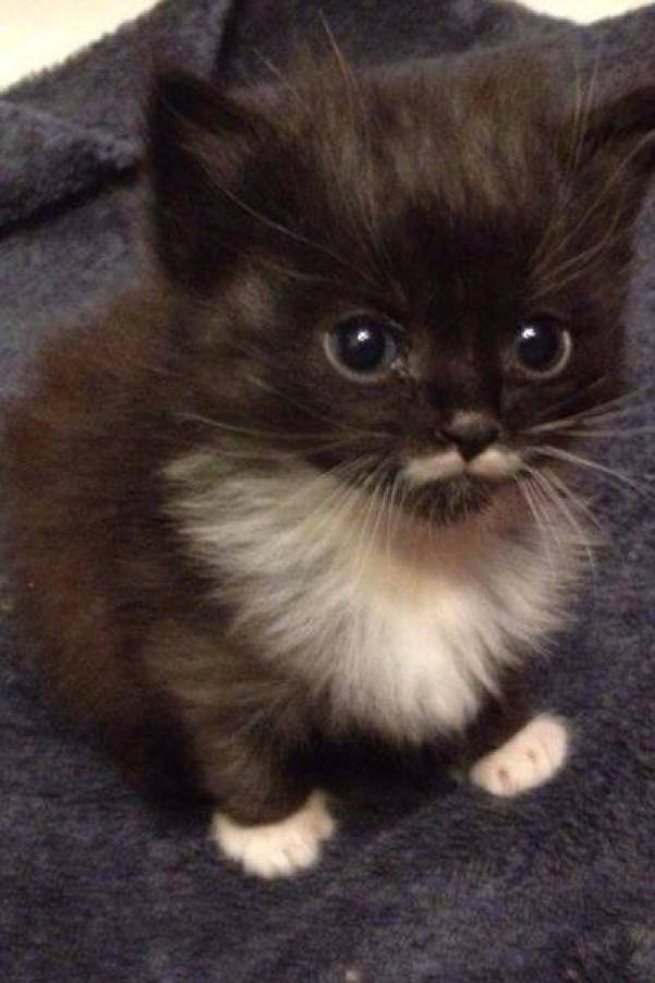 moustached kitty