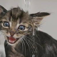 """Poop Explosion"" Makes Kitten Overnight Sensation"