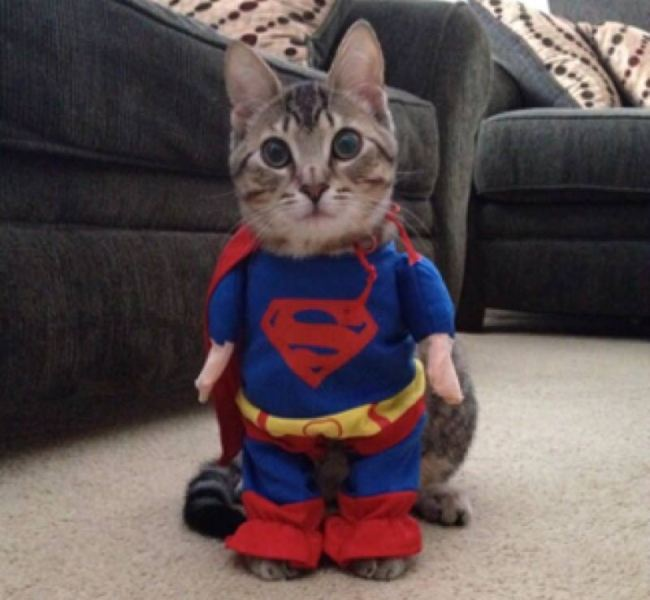 Superkitty!