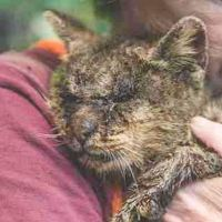 Everyone Was Scared to Touch This Diseased Cat, but One Woman Didn't Care