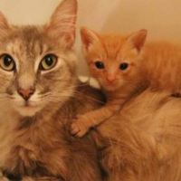 Heartbroken Cat Finds Happiness When She Becomes Mom to Orphaned Kitten In Need of Love