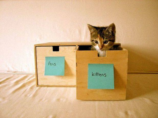 Perfect kitten storage!
