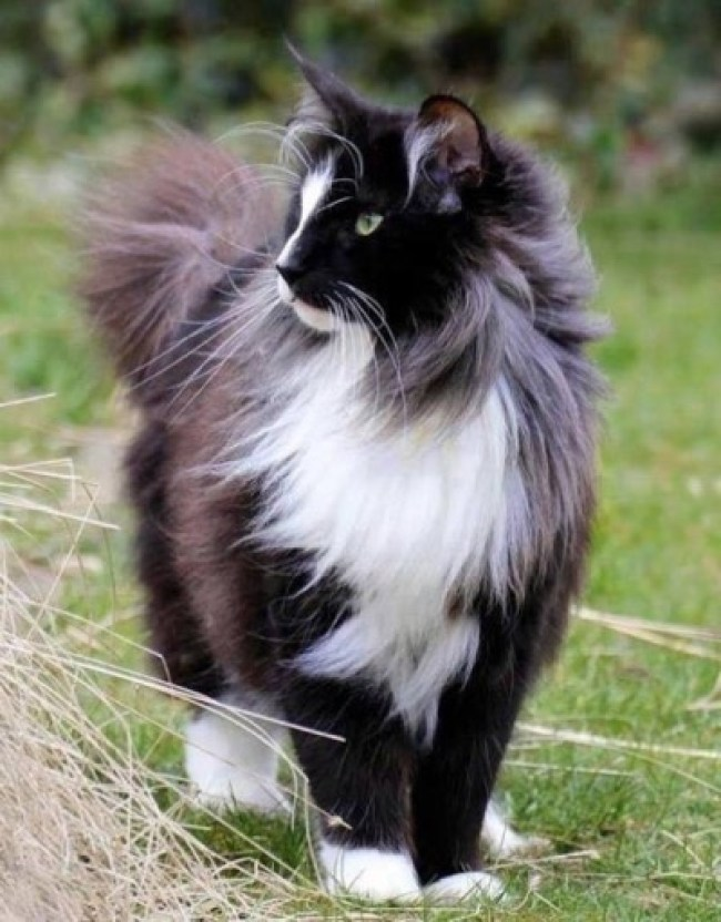 What a lovely looking cat don't you think?