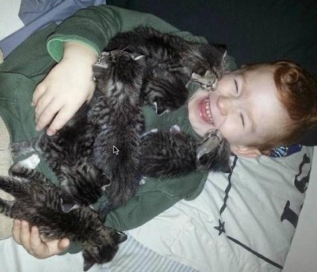 When kittens attack
