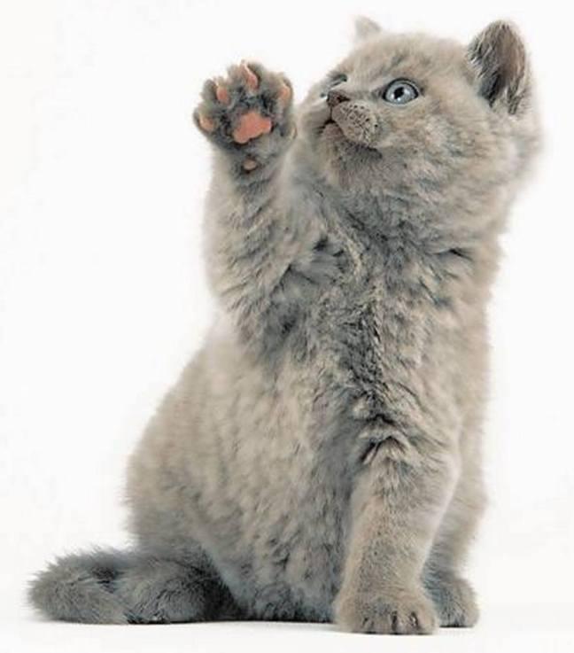 A fluffy high five !