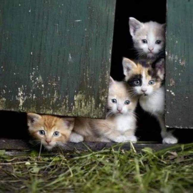 _These-barn-kittens