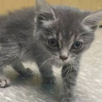 Cat That Remains Forever a Kitten Never Gave Up on Life