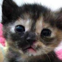 Am I Cute? - 23rd December 2017