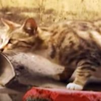 Cat Mom Waits For Rescuers To Save Her Kitten