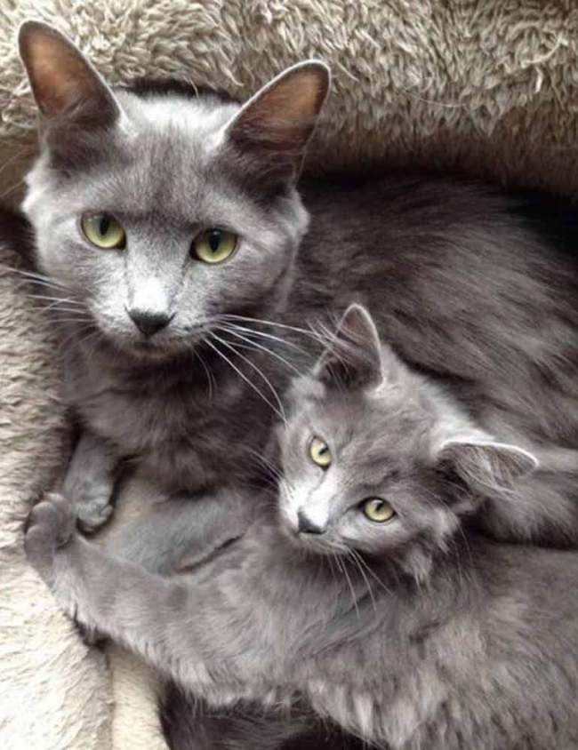Two-grey-beauties