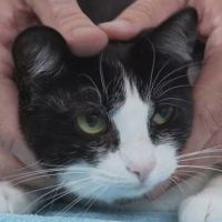 How to Pick Up a Cat Like a Pro - Vet Advice on Cat Handling