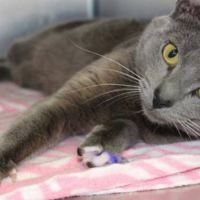 This Cat's Paws Were Painted Purple and the Reason is Heartbreaking