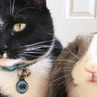 Feisty Cat Plays So Gently With His Bunny Best Friend