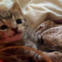 Stray Kitten Survived Against All Odds And Can't Stop Smiling Now