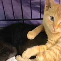 This Kitten Still Keeps Protecting His Brother After Rescued From Wildfires
