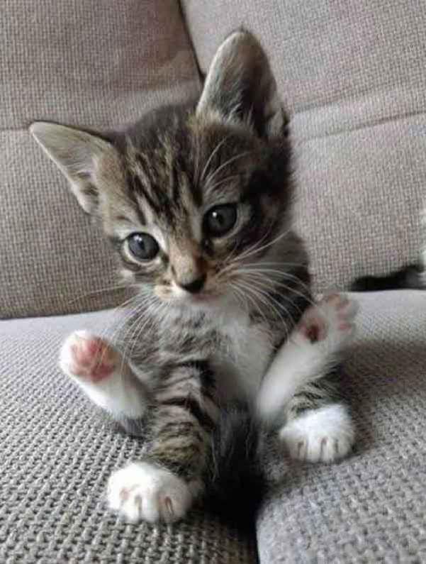cutie1
